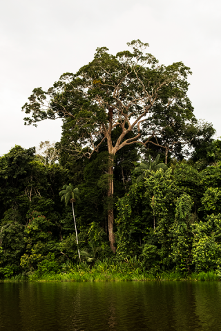Three Chimbadas Lake - Chestnut tree